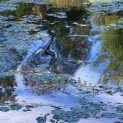 WaterliliesSoutineReplacement